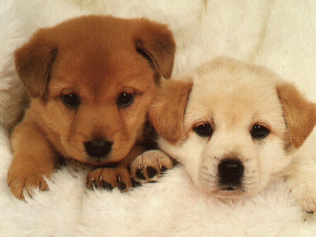 Caini - poze cu animale