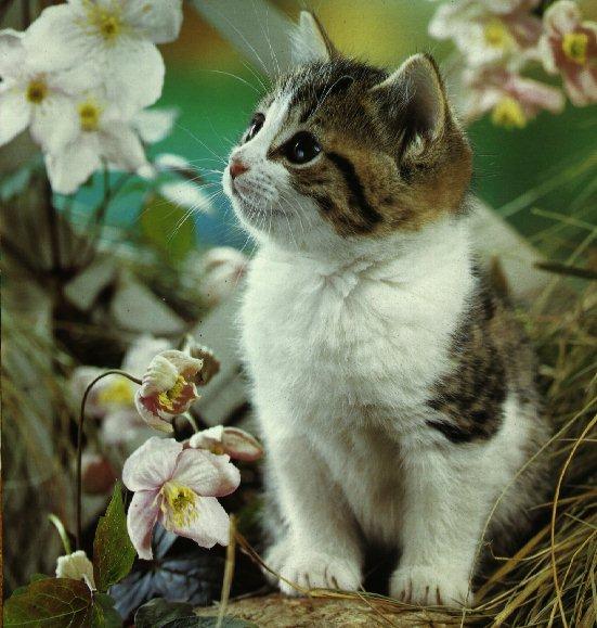 Pisici - poze cu animale