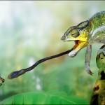 Reptile - Cameleonul