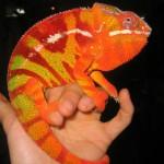Reptile - Cameleonul 2
